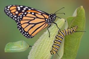 De la chenille au papillon, le changement dans l'entreprise